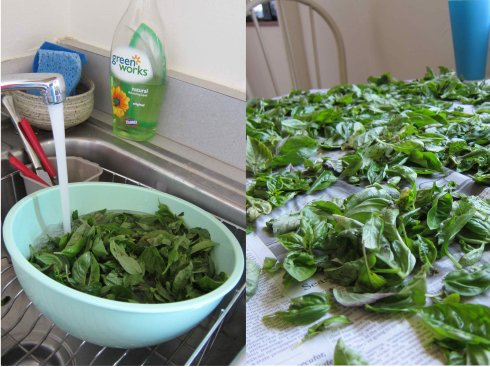 Wash and dry the basil.
