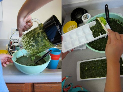 Pour out pesto and fill ice cube trays.